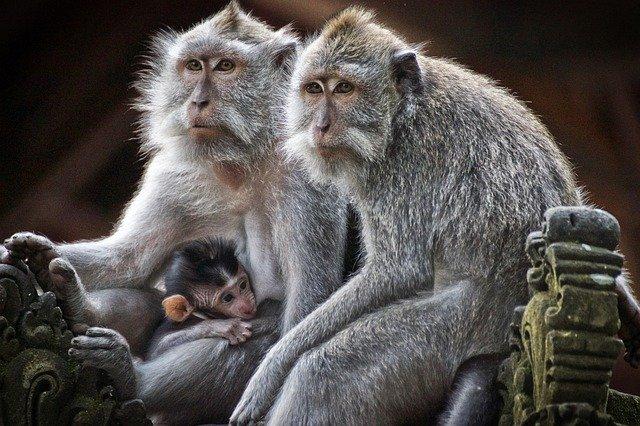 No pienses en monos, cuento sobre la mente